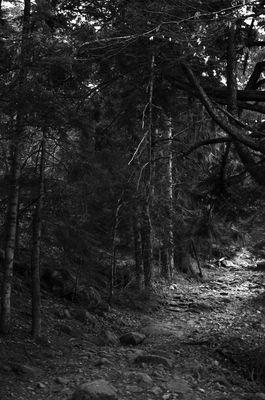Sentier vers le lac du forlet en venant du lac noir