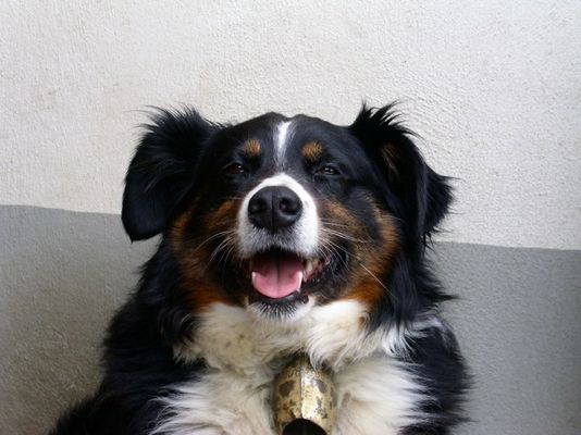 Sepp's Hund