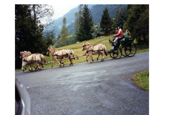 Sept chevaux écolos