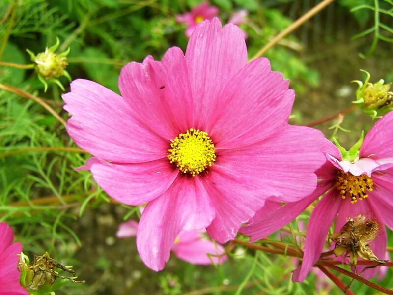 September Blüte