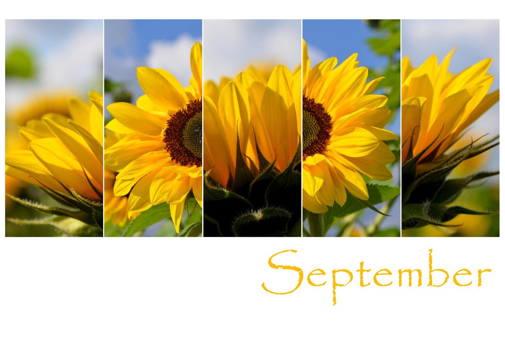 September-Farben
