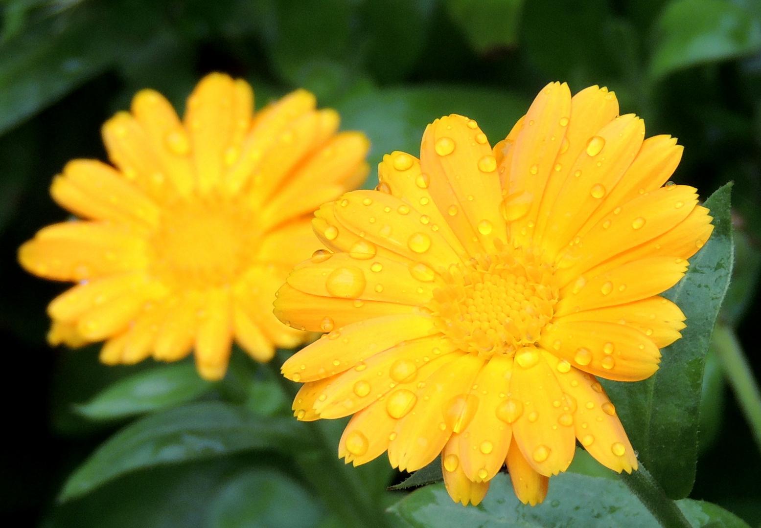 September-Gelb-Gold