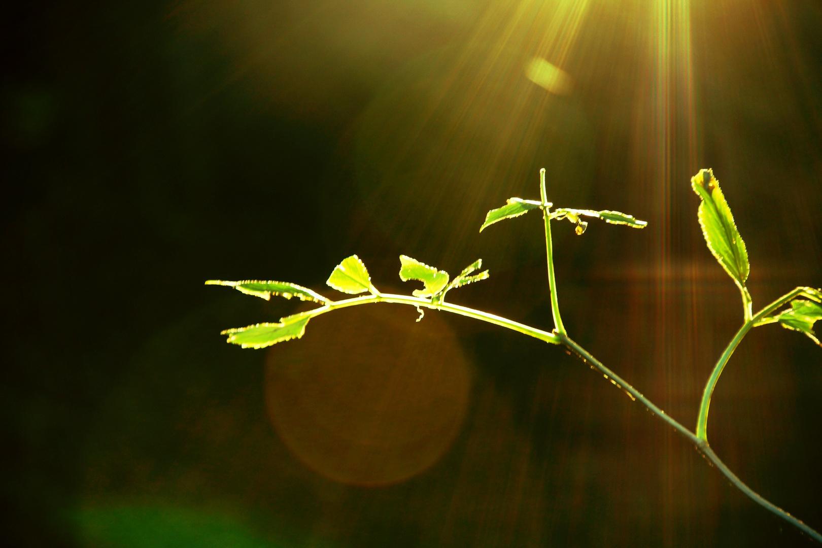 September grün....