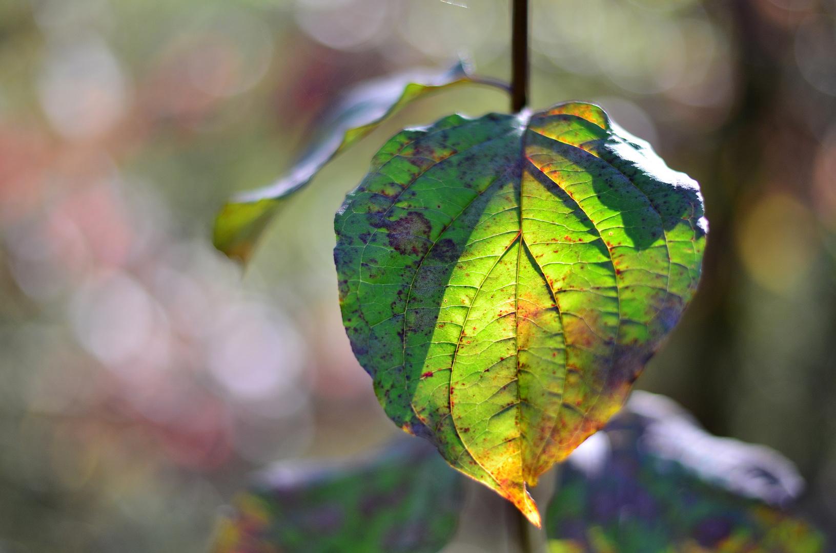 September-Meditation :-)