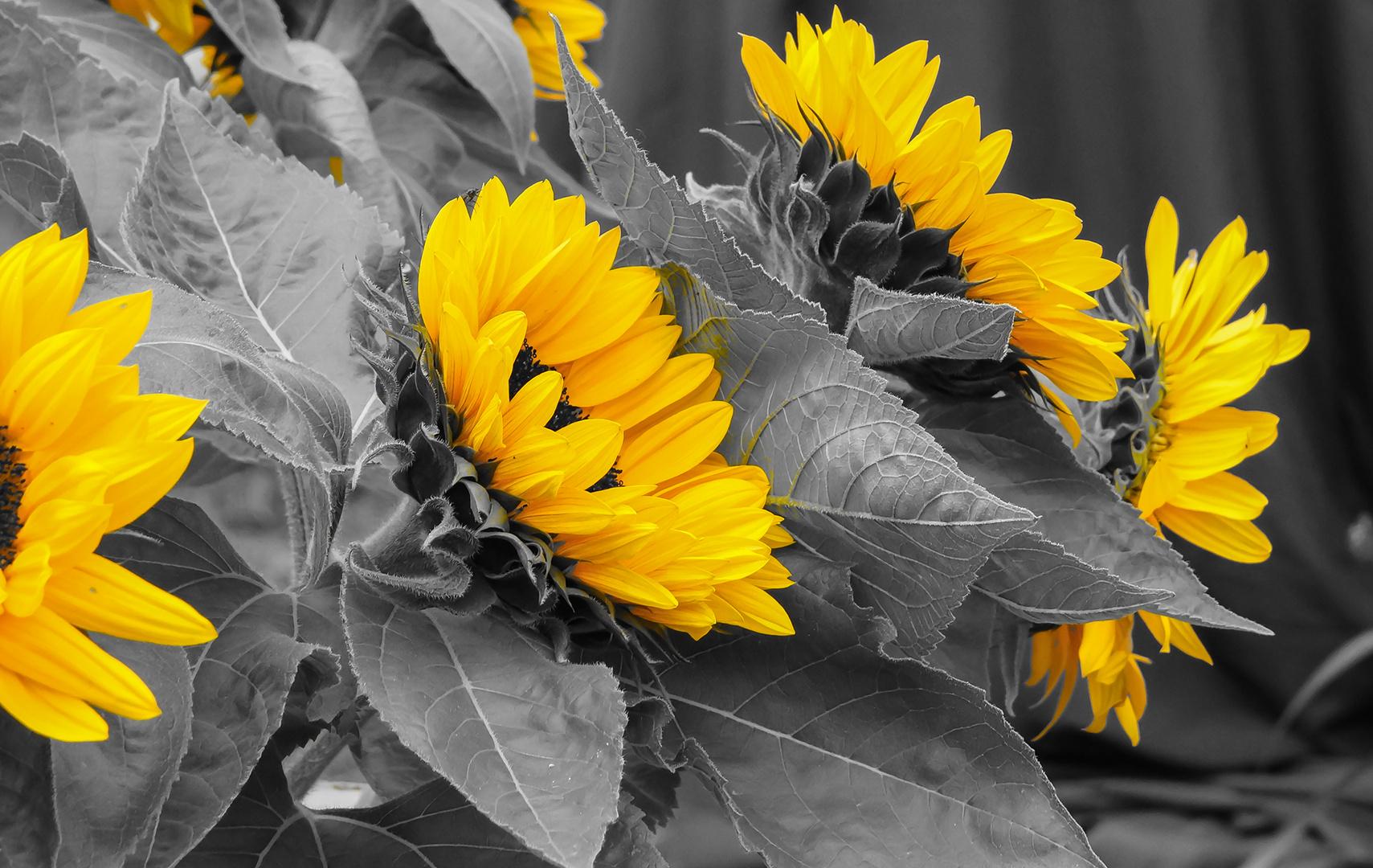 September-Sonne