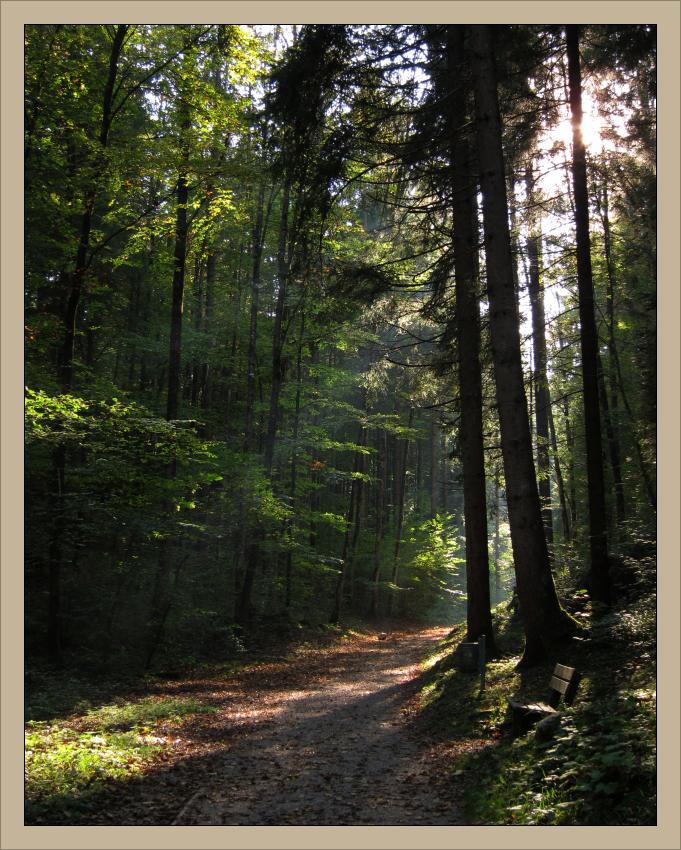 September-Wald