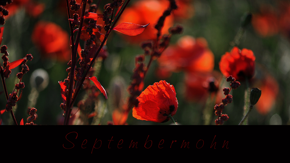 SEPTEMBERMOHN