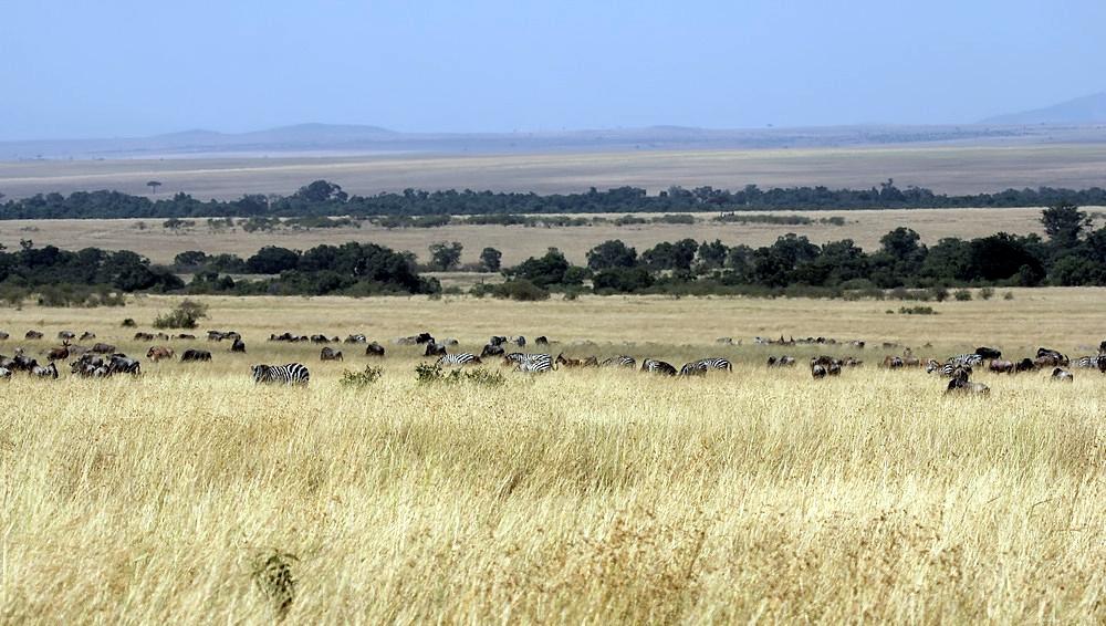 Serengeti...