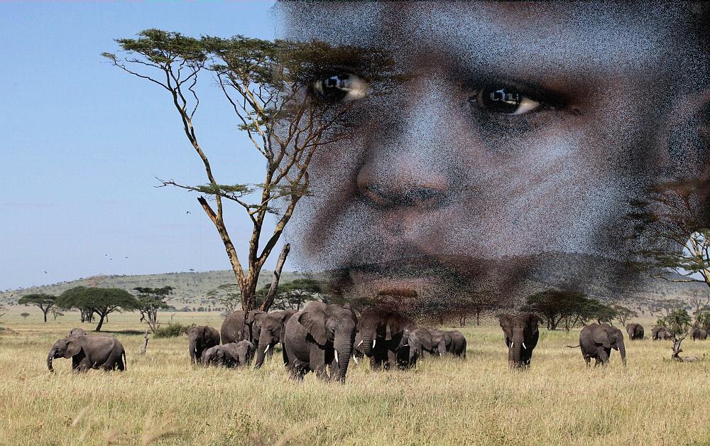 Serengeti , gut bewacht