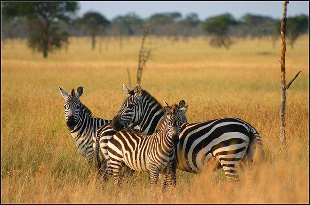 serengeti-morgen