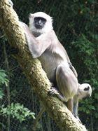 Serengeti Park Affen