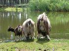 Serengeti Park, Hodenhagen ;-)