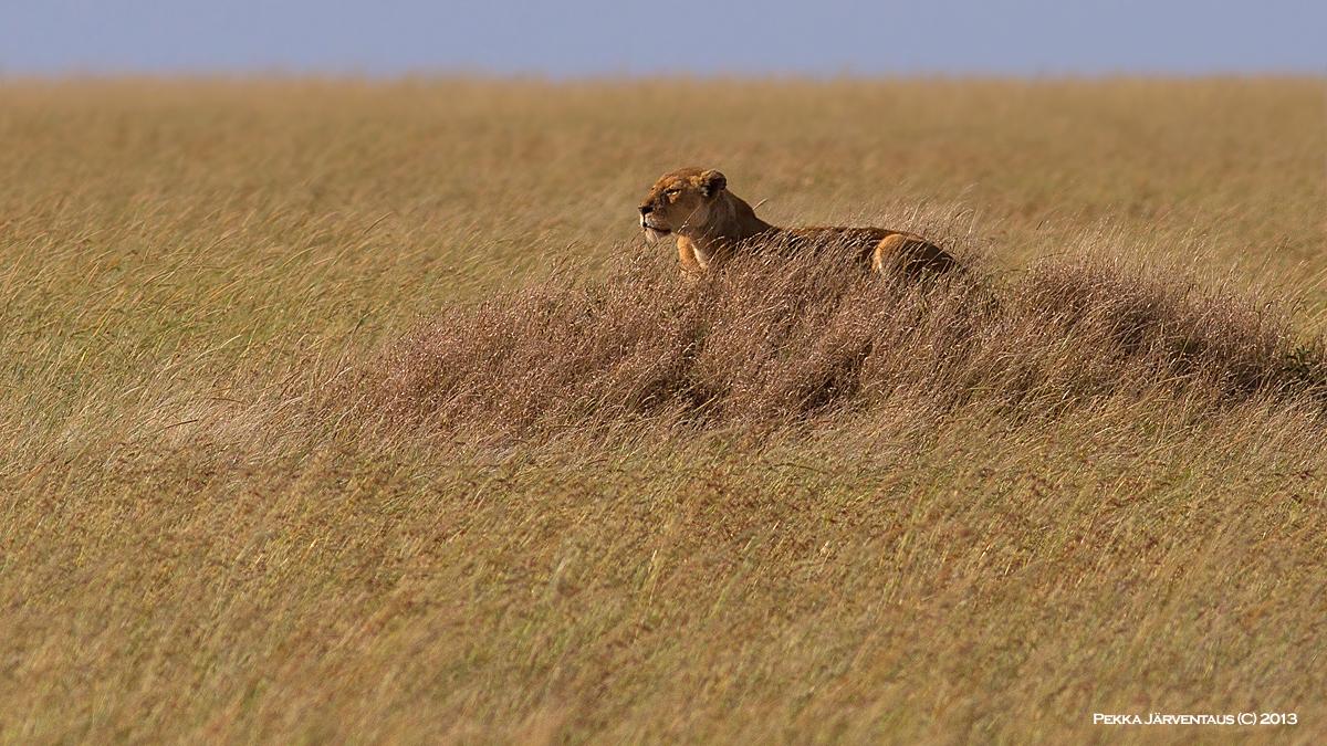 Serengeti Stakeout
