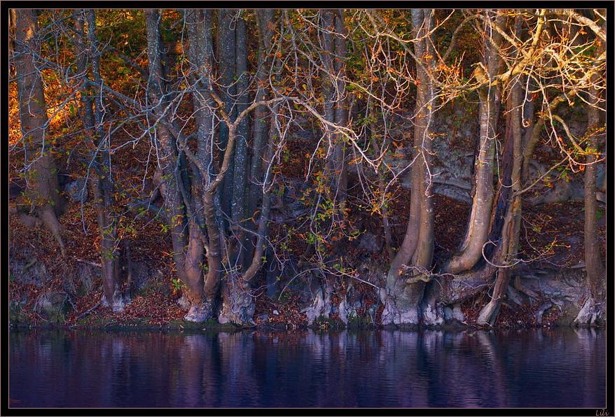 Sérénité d'automne