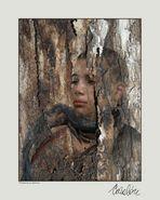 Serie: ELEMENTOS - El dolor de un árbol seco