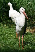 Serie Rostocker Zoo 5 / 8
