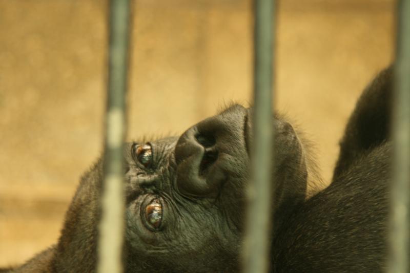 Serie Rostocker Zoo 6 / 8