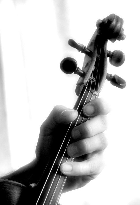 Serie Viola - 3 -
