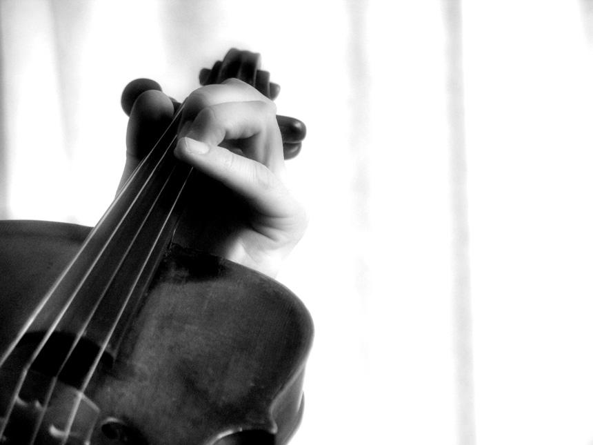 Serie Viola - 4 -