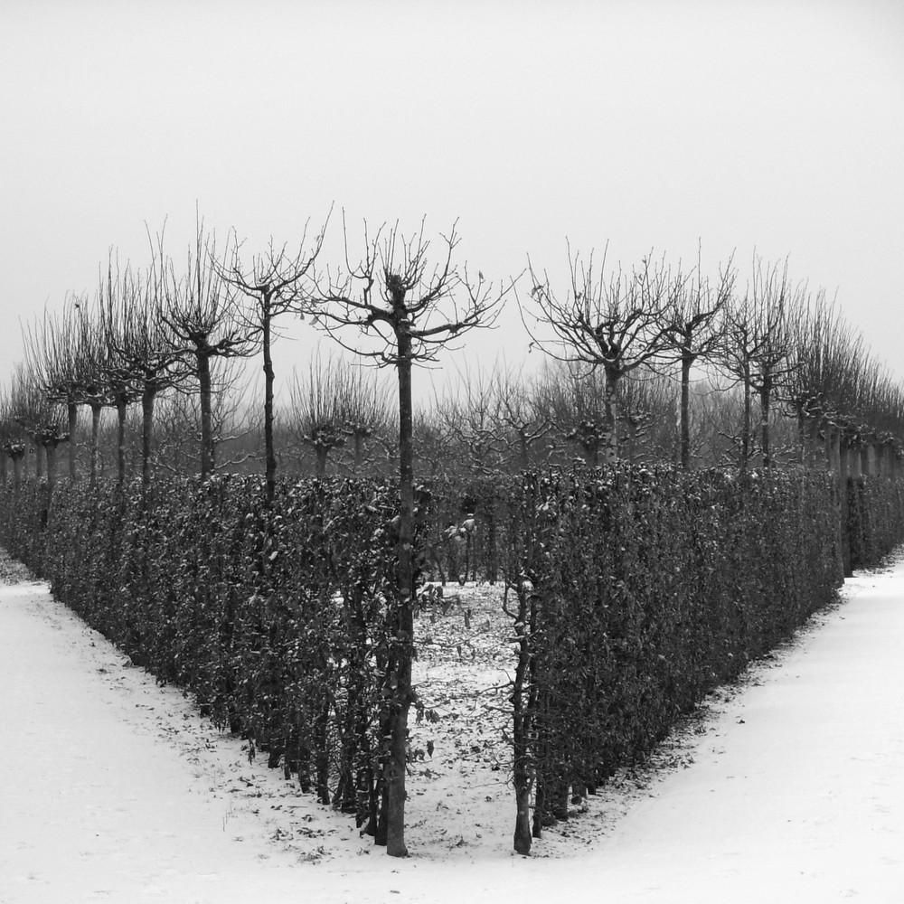 Serie:Winter in Parks1