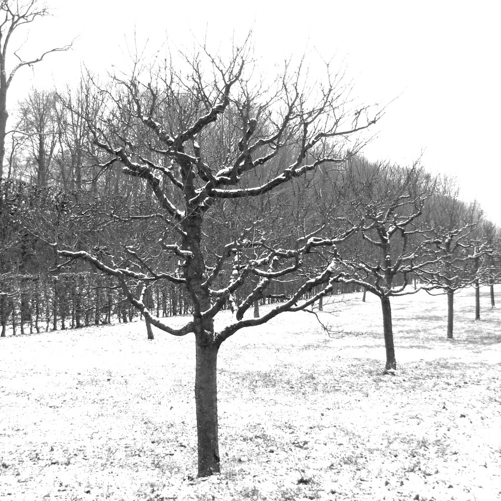 Serie:Winter in Parks2