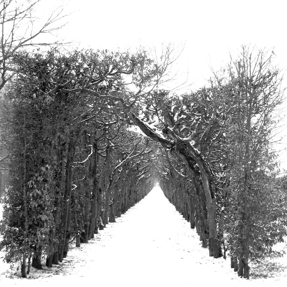 Serie:Winter in Parks5