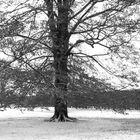 Serie:Winter in Parks8