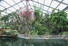 Serre des tropiques
