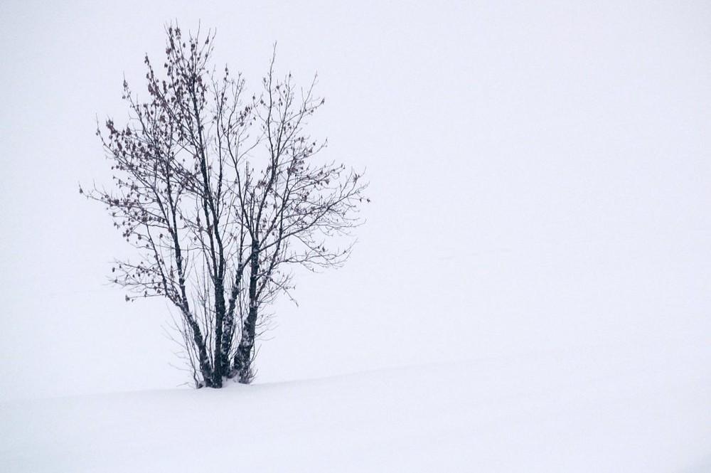 Seul dans la neige