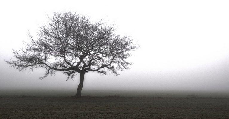Seul dans le brouillard