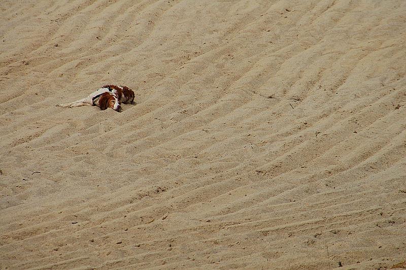 seul ..... sur la plage !!!