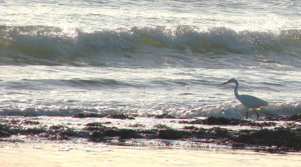 Seule sur la plage...les pieds dans l'eau.