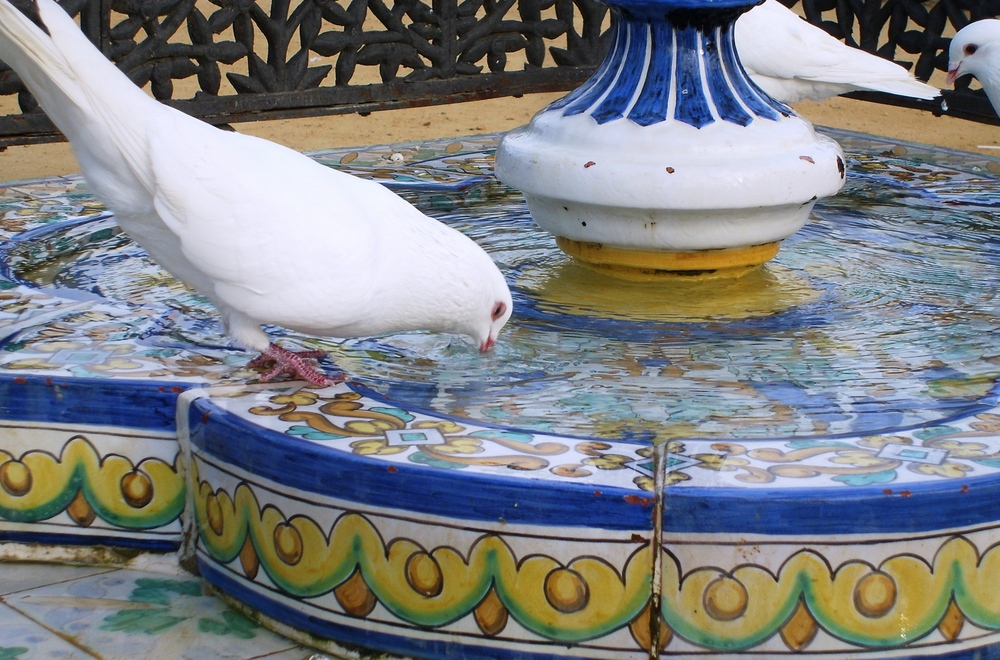Sevillas Tauben