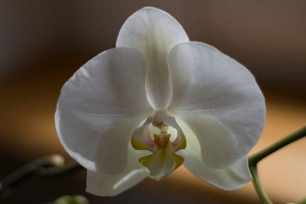 Sex und Blume