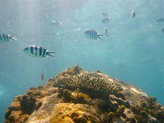 [Seychelles] Parc national marin de Sainte Anne