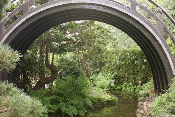 SFO Garden