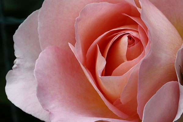 Sfumature di rosa...