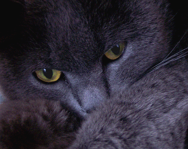 ----- sguardo intrigante -----