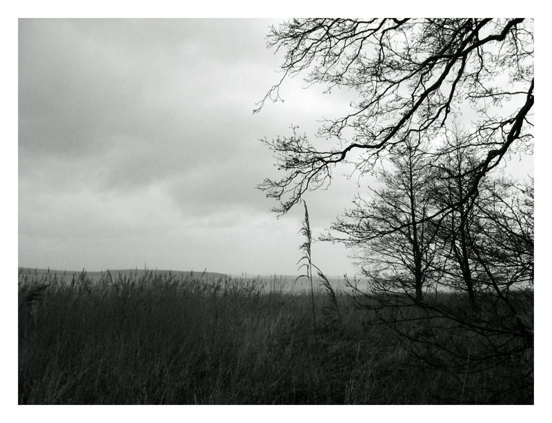 shades of grey (2)