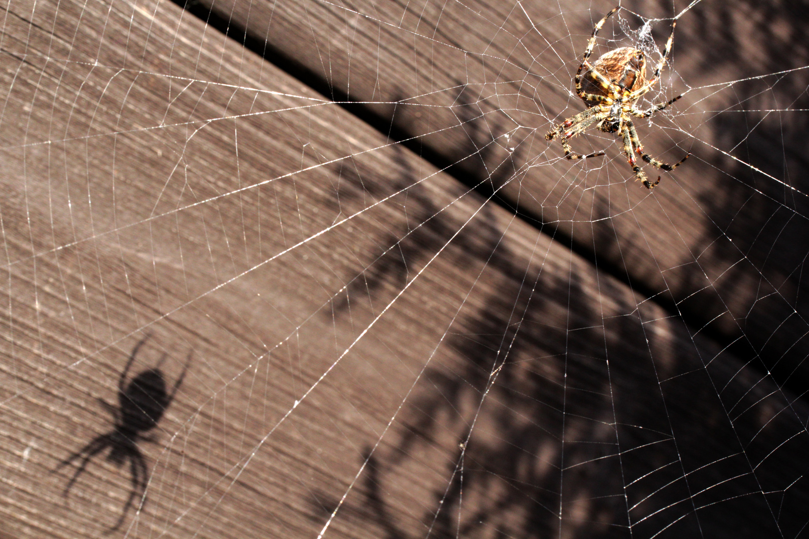 Shadow of the spider