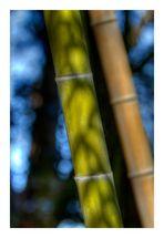 Shadow on Bamboo