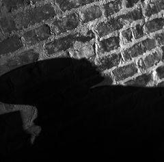 shadow.works