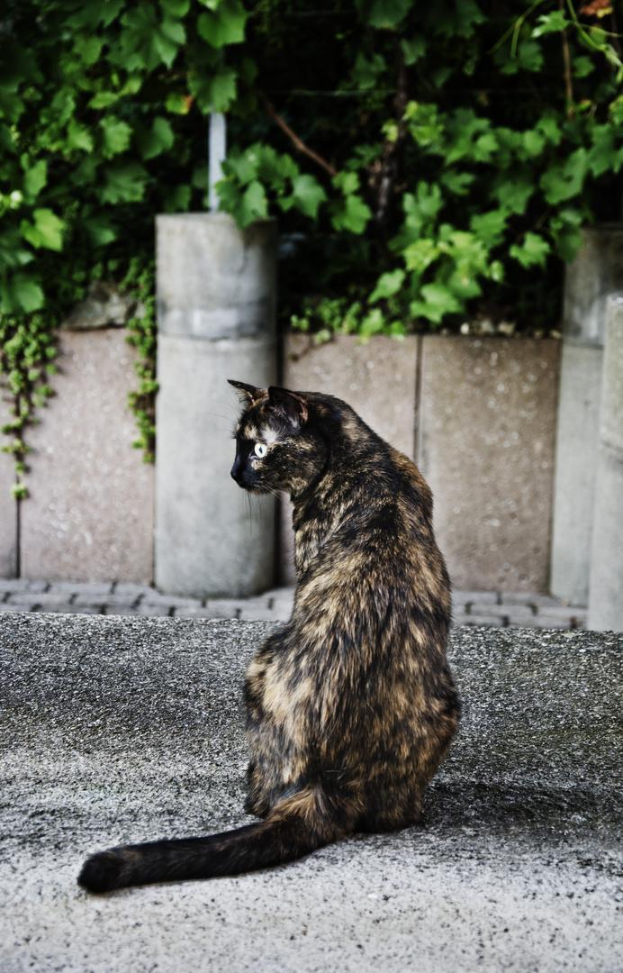 Shaka bewacht den Eingang