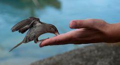 shake hands.....