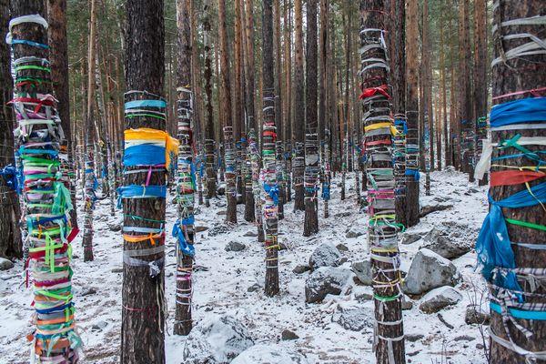 shamanic trees in Siberia