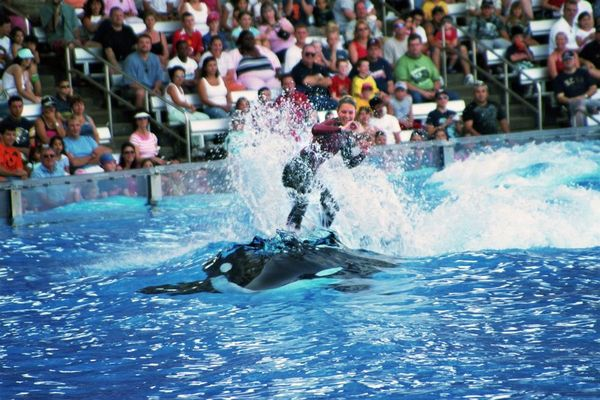 Shamu Show, Sea World