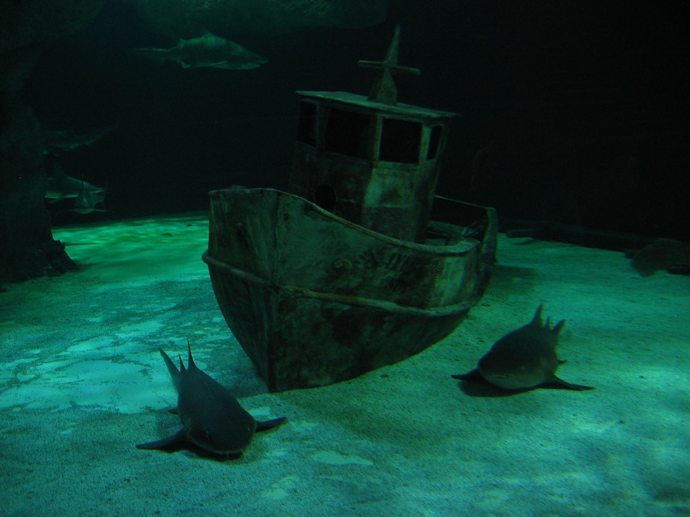 Shark Attac