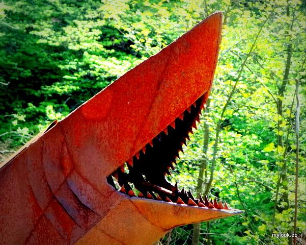 ...Shark attack...