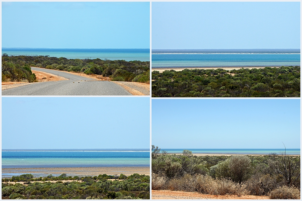 ,,Shark Bay 5..