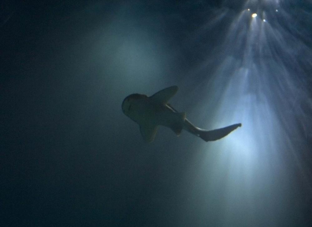 Shark'n Sun